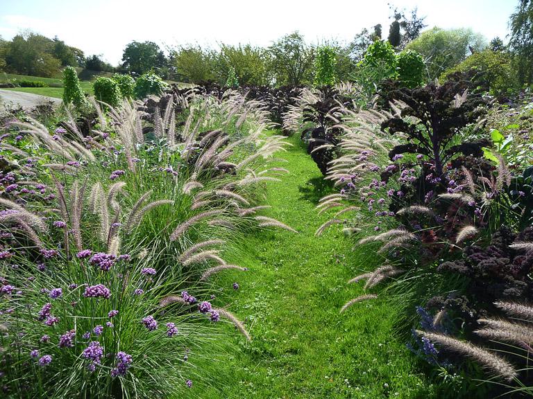 Allée de pelouse entourée de massifs de verveines de Buenos-Aeres, choux de Toscane et herbes-aux-écouvillons, Parc floral de Paris, Paris 12e (75)