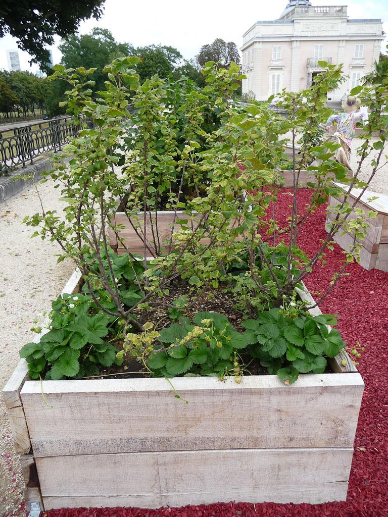 """Petits fruits sur la terrasse côté Seine avec le potager en carrés, exposition """"Savez-vous planter les choux ?"""", parc de Bagatelle"""