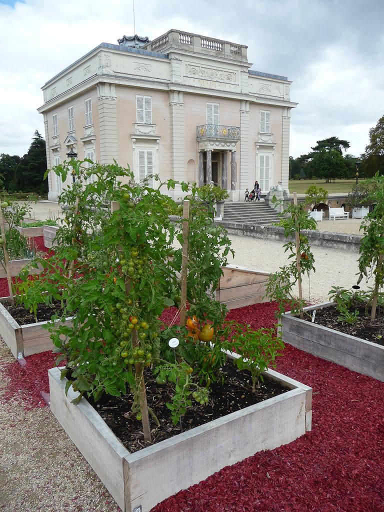 """Tomates, terrasse côté Seine avec le potager en carrés, exposition """"Savez-vous planter les choux ?"""", parc de Bagatelle"""