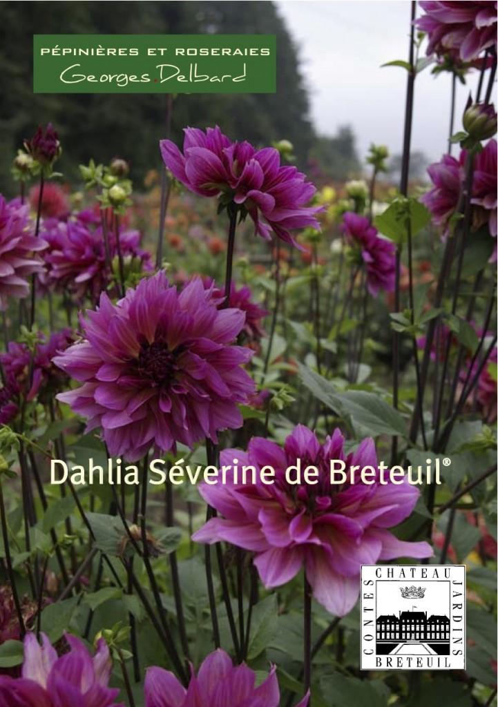 Baptême du dahlia Séverine de Breteuil