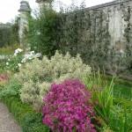 Bordure d'asters et de plantes vivaces dans le Potager du Roi en automne, Versailles (78)