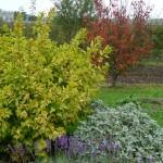 Jardin Duhamel du Monceau en automne, Versailles (78)