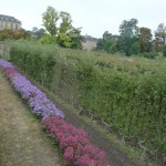 Bordure d'asters et arbres fruitiers palissés dans le Potager du Roi en automne, Versailles (78)