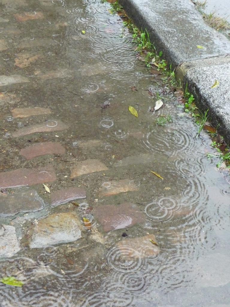 Caniveau rempli d'eau par un dimanche d'automne pluvieux dans le cimetière du Père Lachaise, Paris 20e (75)