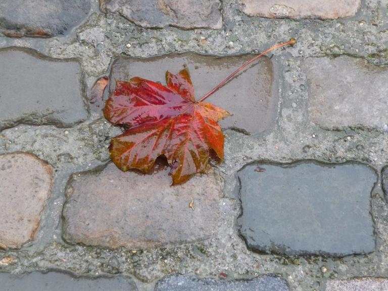 Feuille morte par un dimanche d'automne pluvieux dans le cimetière du Père Lachaise, Paris 20e (75)