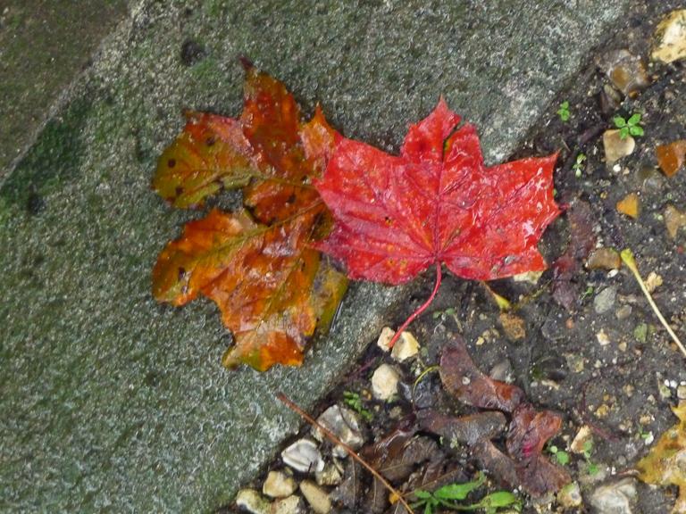 Feuilles mortes par un dimanche d'automne pluvieux dans le cimetière du Père Lachaise, Paris 20e (75)