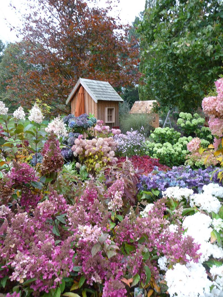 Collection d'hydrangéas des Pépinières de la Thyle, Journées des Plantes de Courson (Essonne), automne