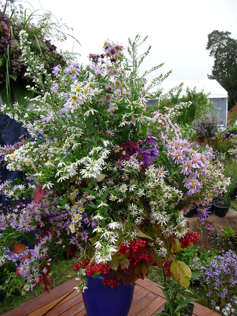 Bouquet d'asters et de viornes sur le stand du Domaine de la Source, Journées des Plantes de Courson