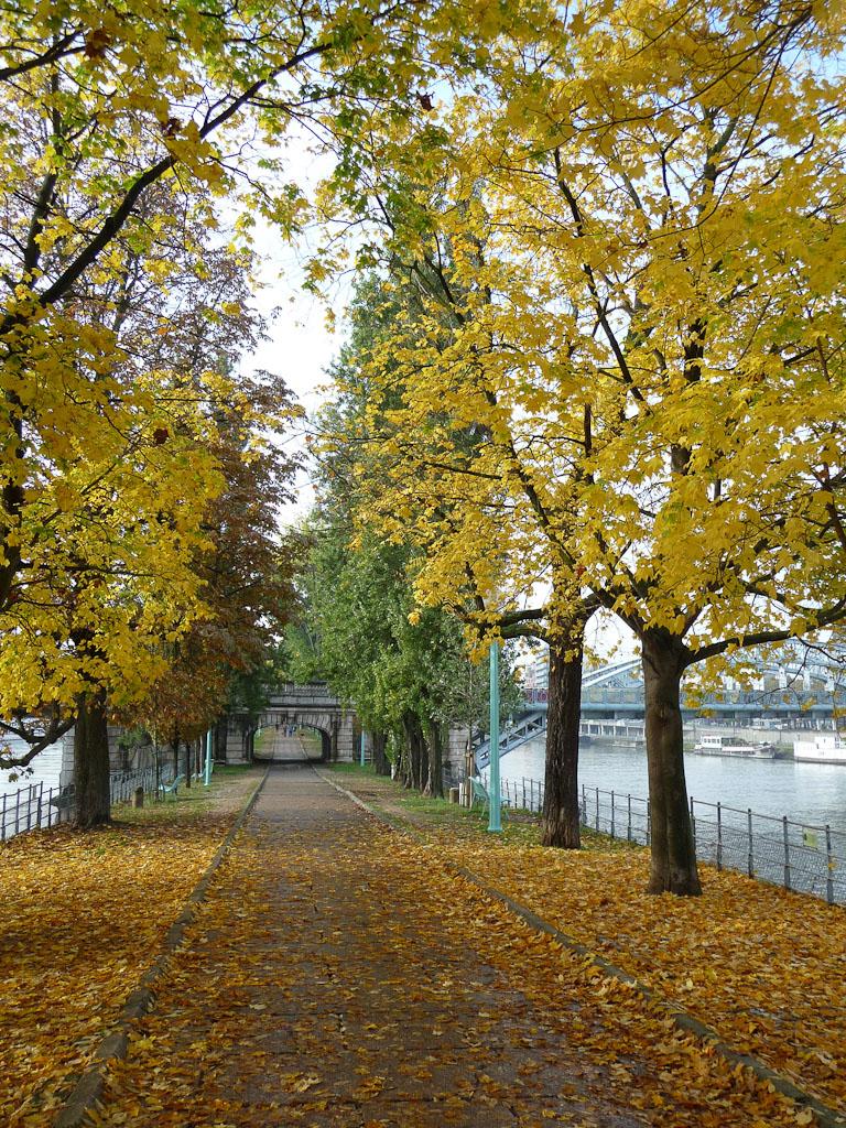 Alignements d'arbres avec leurs couleurs d'automne dans l'Allée des Cygnes, Paris 15e (75)