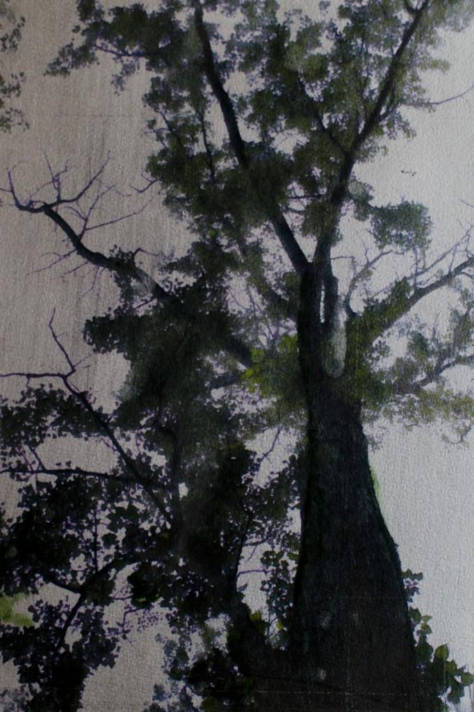 Tree / Franck Landron