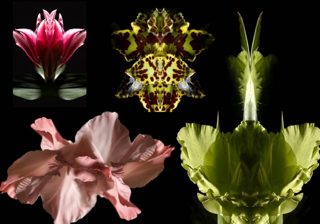 Miroir végétal / Florence Verrier / Hervé Gambs Paris