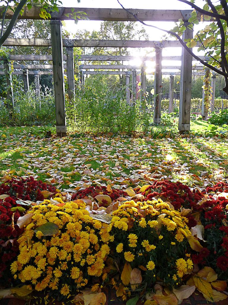 Pergola et chrysanthèmes dans le parc de Bercy en automne, Paris 12e (75)