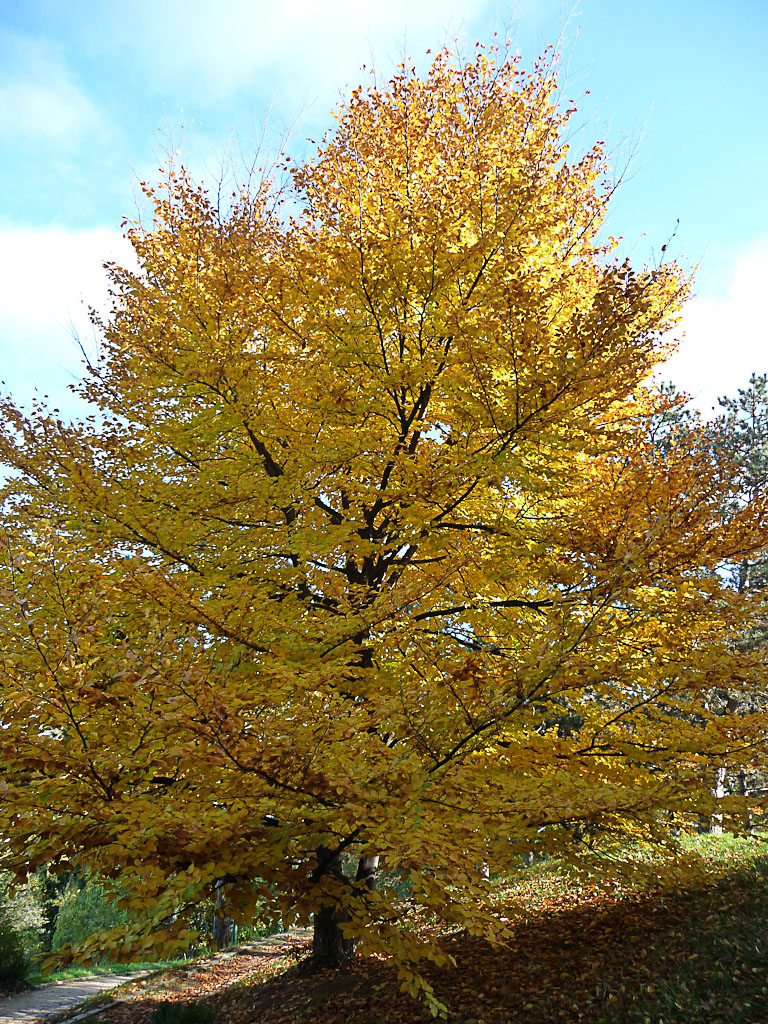 Feuillage d'automne doré dans le Parc Georges Brassens, Paris 15e (75)
