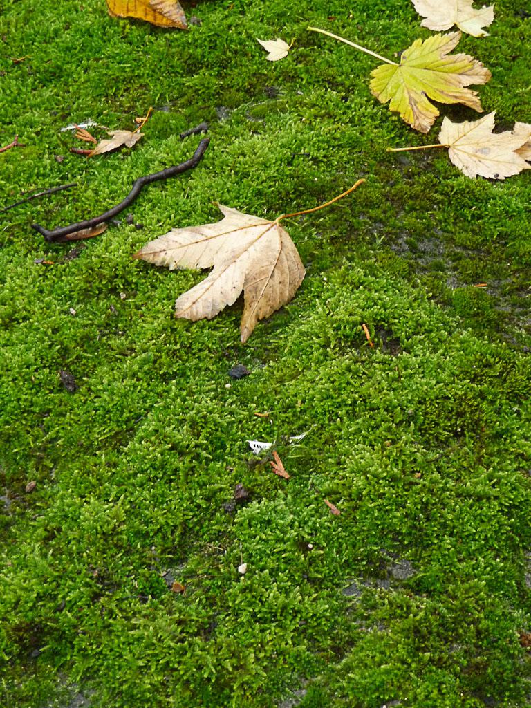 Tapis de mousse bien vert en automne dans Montmartre, Paris 18e (75)