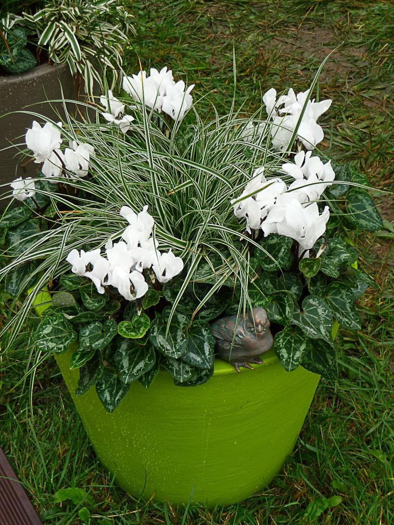Potée de minis cyclamens Metis blancs et de laîches (Carex), création Cyclamens Morel, Journées des Plantes de Courson (Essonne)