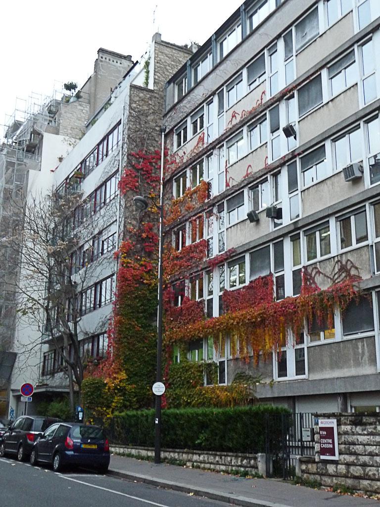 Vigne vierge flamboyante sur un immeuble de la rue Cassini en automne, Paris 14e (75)