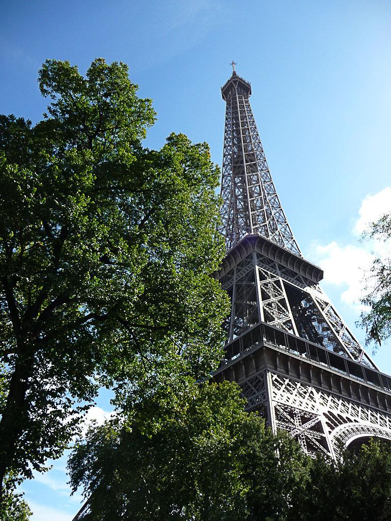 Arbre au pied de la Tour Eiffel, Paris 7e (75)