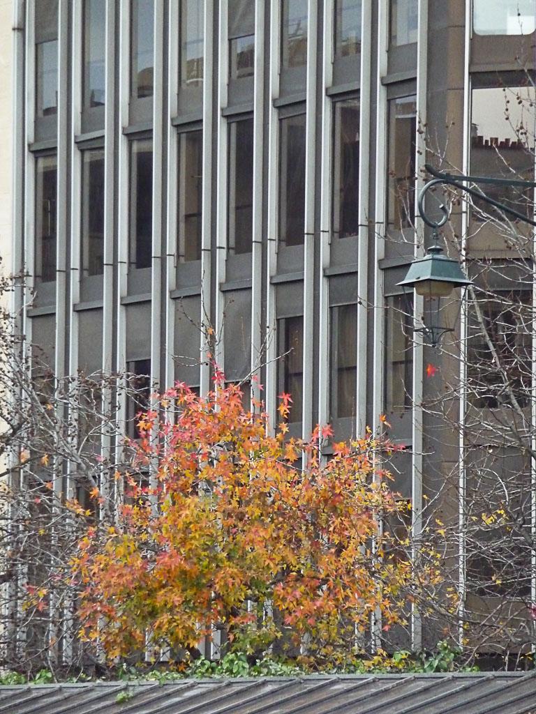Arbre avec un reste de feuillage d'automne au début de l'hiver, Neuilly-sur-Seine (92)