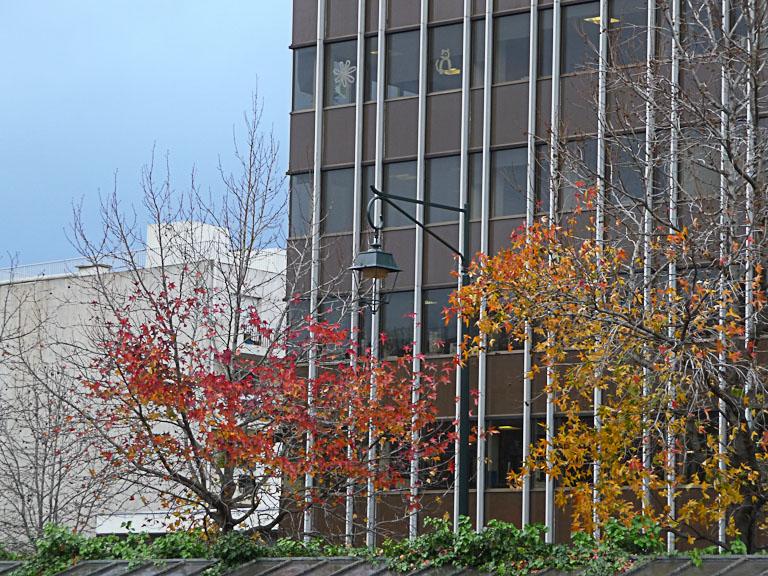Arbres avec un reste de feuillage d'automne au début de l'hiver, Neuilly-sur-Seine (92)