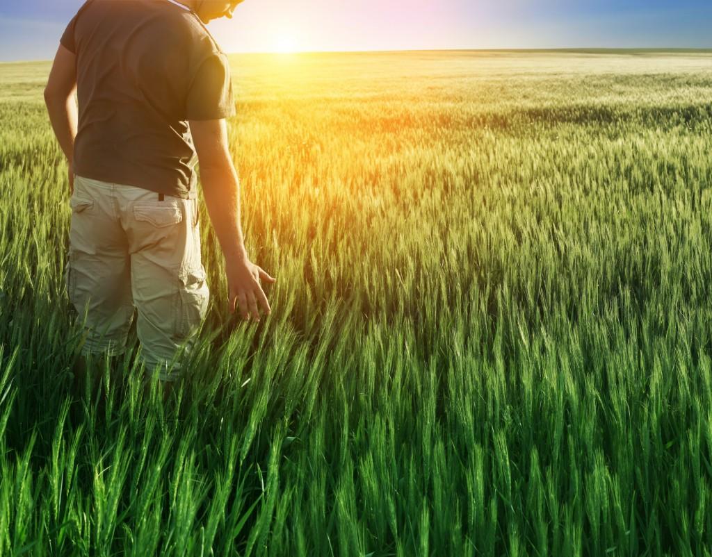 Homme dans un champ de blé, © Liliia Rudchenko - Fotolia.com