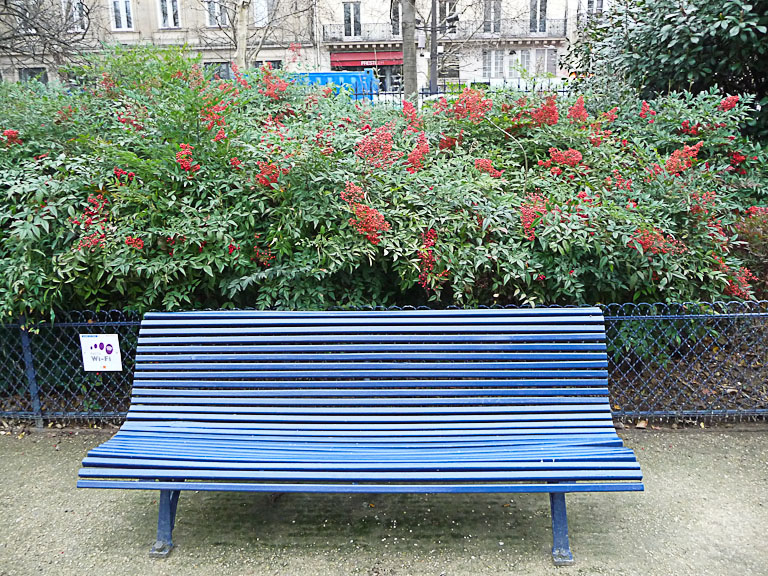 Bambous sacrés (Nandina domestica) couverts de grappes de baies rouge vif, square de la Tour Saint-Jacques, Paris 4e (75)