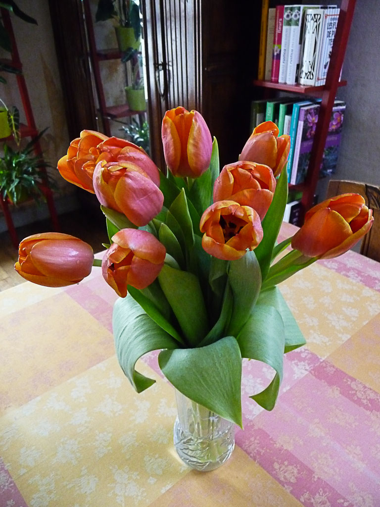 Bouquet de tulipes roses et orange, fleurs coupées, Paris 19e (75)