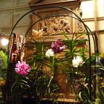Vanda, orchidée, Salon international « Orchidées au pays des Incas », FFAO, 20 janvier 2013, Fondation Eugène Napoléon, Paris 12e (75), photo Alain Delavie