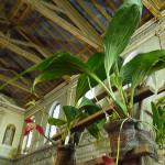 Lycaste, orchidée, Salon international « Orchidées au pays des Incas », FFAO, 20 janvier 2013, Fondation Eugène Napoléon, Paris 12e (75), photo Alain Delavie
