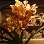 """Pour toutes celles et ceux qui n'ont pas pu se déplacer jusqu'à la Fondation Eugène Napoléon à la fin de la semaine dernière, voici quelques photos de ce 9ème Salon International """"Orchidées au pays des Incas"""" organisé par la F.F.A.O."""
