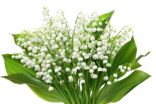 Bouquet de muguet, photo Profotokris / Fotolia.com