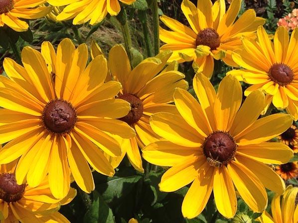 Parc floral de Paris en été, Paris 12e (75)
