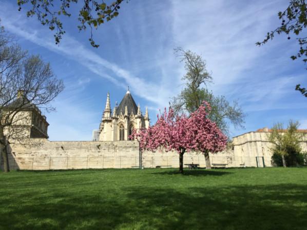 Cerisier à fleurs (Prunus) près du Château de Vincennes, Paris 12e (75)