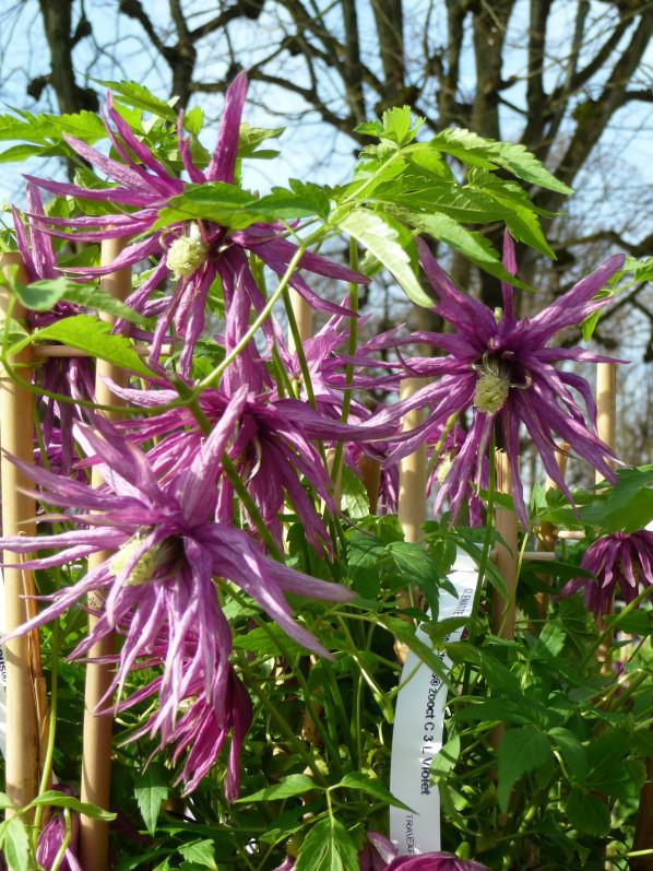 Fête des plantes printemps, Domaine de Saint-Jean de Beauregard
