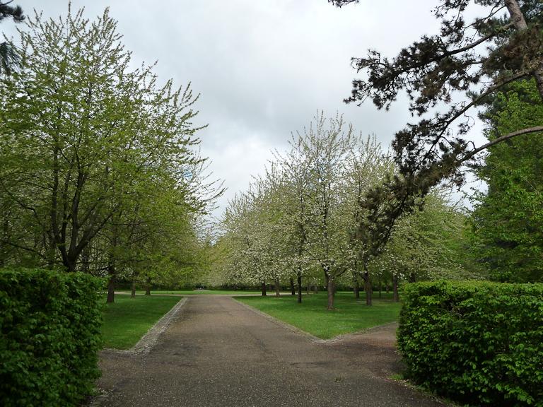 Merisiers des oiseaux (Prunus avium 'Plena'), bosquet Sud, parc de Sceaux, Hauts-de-Seine