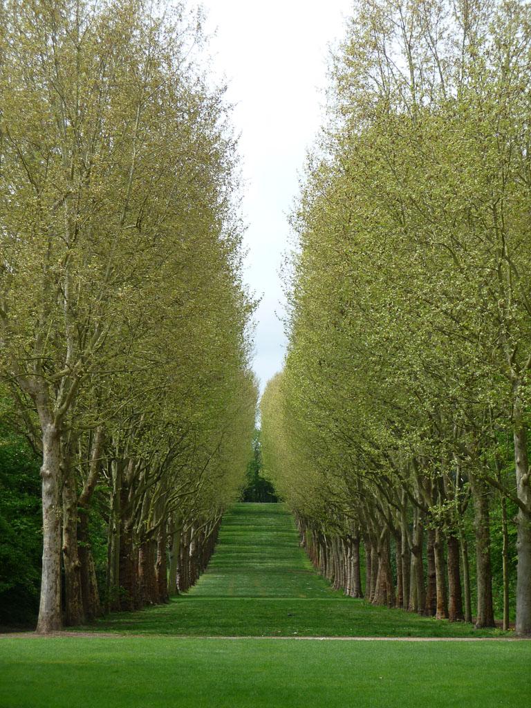 Doubles rangées de platanes dans le Parc de Sceaux, Hauts-de-Seine