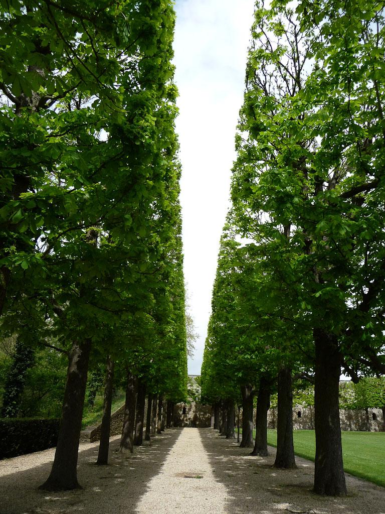 Double rideaux d'arbres dans le parc de Sceaux, Hauts-de-Seine