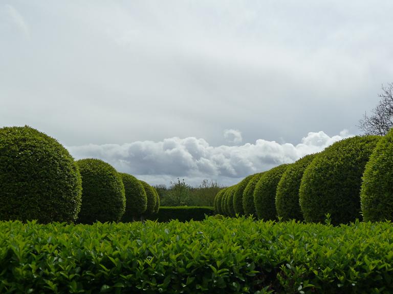Haie et topiaires, jardin formel devant l'Orangerie du Parc de Sceaux, Hauts-de-Seine