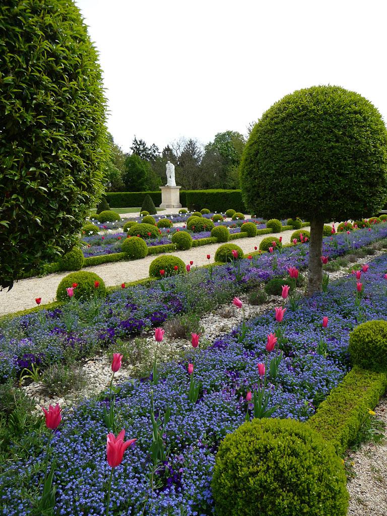 Parterre de myosotis et tulipes, topiaires, jardin formel devant l'Orangerie du Parc de Sceaux, Hauts-de-Seine