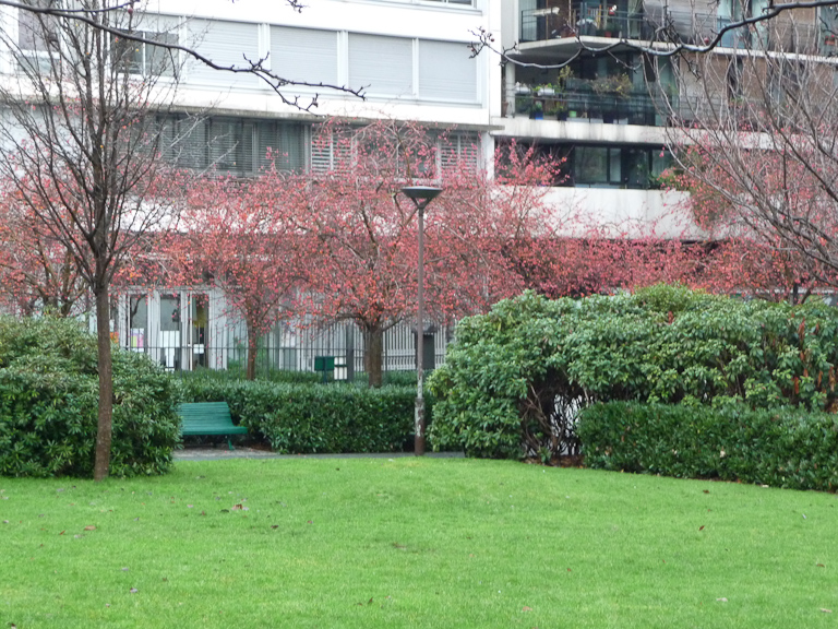 Pommiers d'ornement (Malus) dans le jardin James Joyce en fin d'automne, Paris 13e (75)
