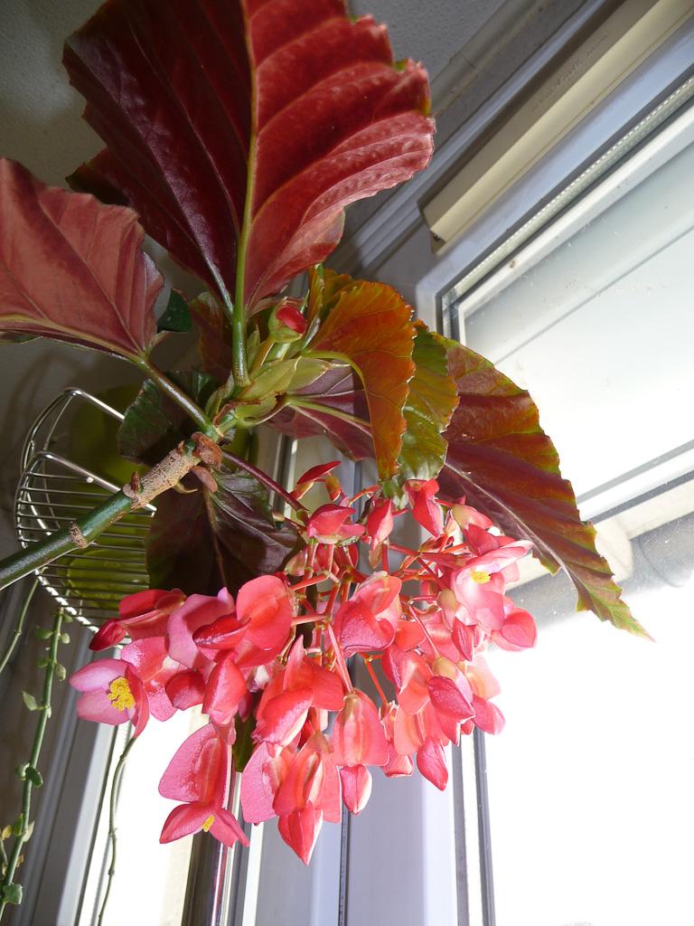 Plante fleurie paris c t jardin for Plante fleurie jardin