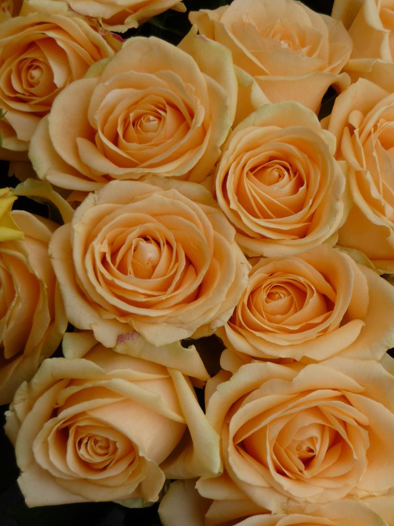 Bouquet de roses, quai de la Mégisserie, Paris 1er (75)