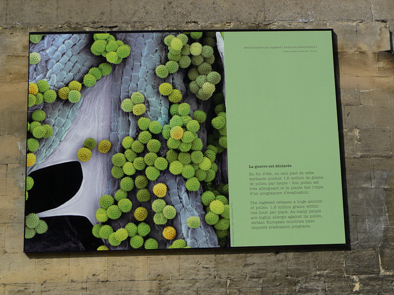 Exposition L'amour est dans l'air, photographies de Martin Oeggerli, Le Potager du Roi, Versailles (78)