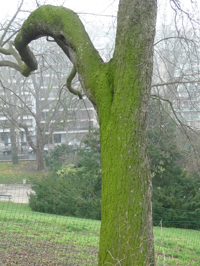Mousse sur tronc d'arbre, parc des Buttes-Chaumont en début d'hiver, Paris 19e (75)