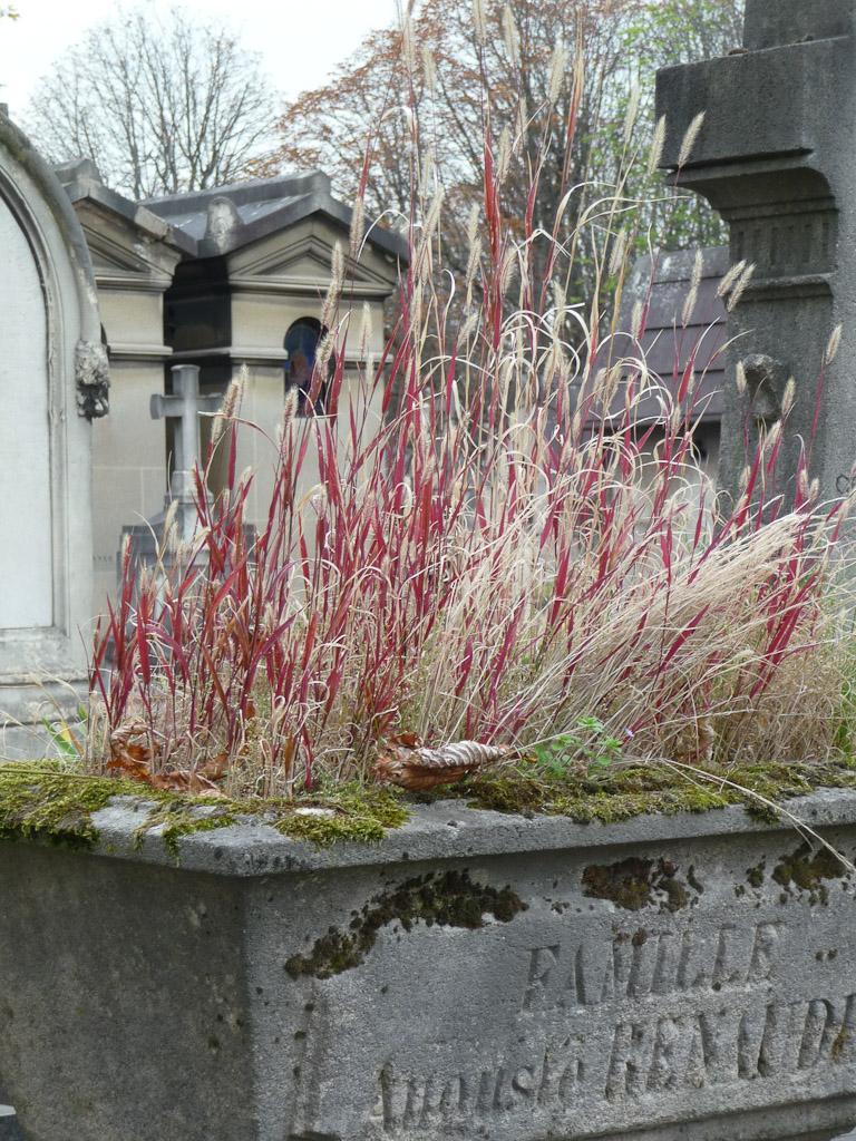 Mauvaise herbe (graminée) dans une jardinière en automne dans le cimetière du Père Lachaise, Paris 20e (75)