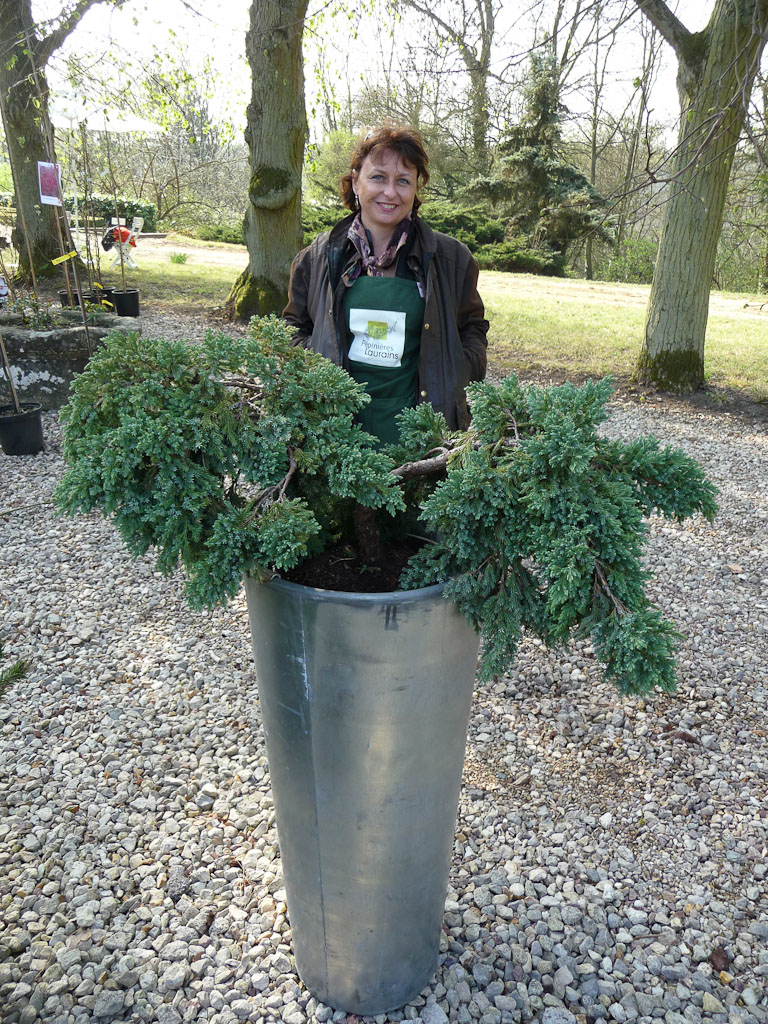 Isabelle Gombault et son Juniperus squamata 'Blue Carpet', Pépinières des Laurains, Fête des Plantes Vivaces de Saint-Jean de Beauregard, Essonne