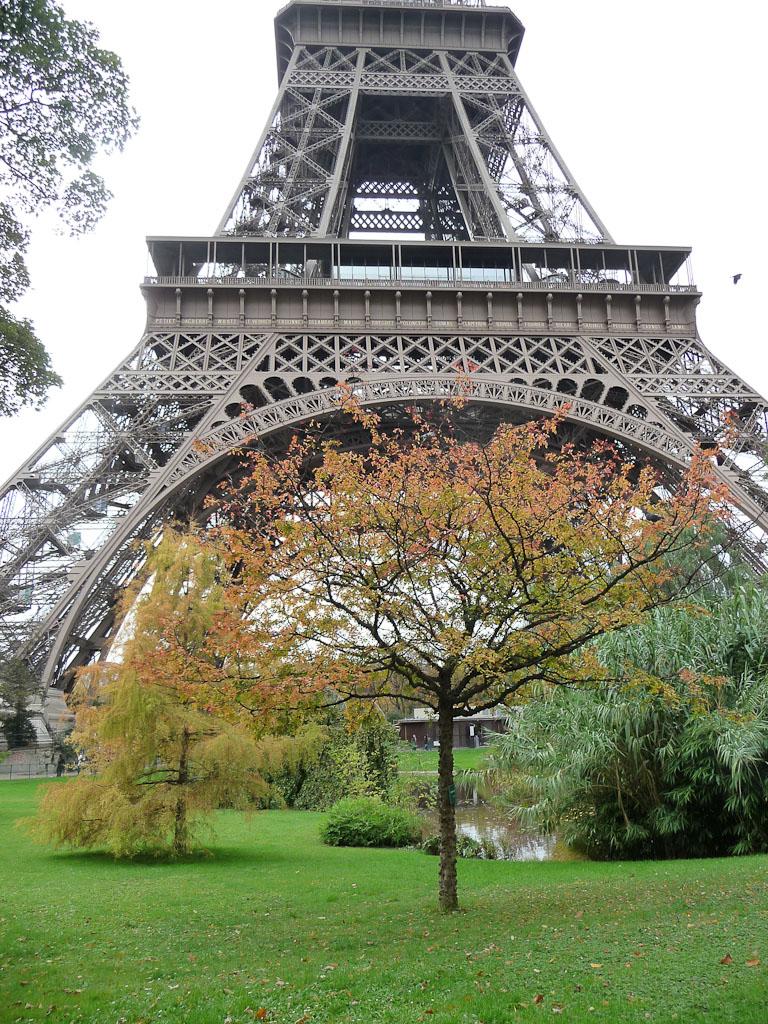 Au pied de la Tour Eiffel, poivrier du Japon (Zanthoxylum piperitum), Champs-de-Mars, Paris 7e (75)