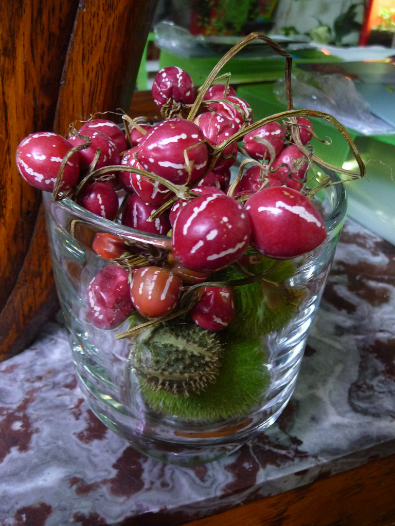 Vase de Cucumis décoratifs (Concombre groseille, Cucumis dipsaceus et Cucumis myriocarpus)