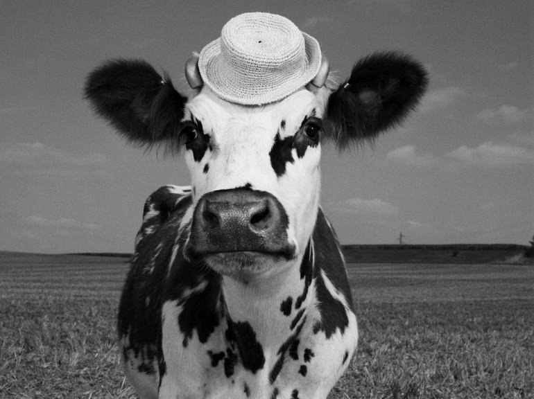 Exposition Oh la vache ! Photographies Jean-Baptiste Mondino, La Milk Factory