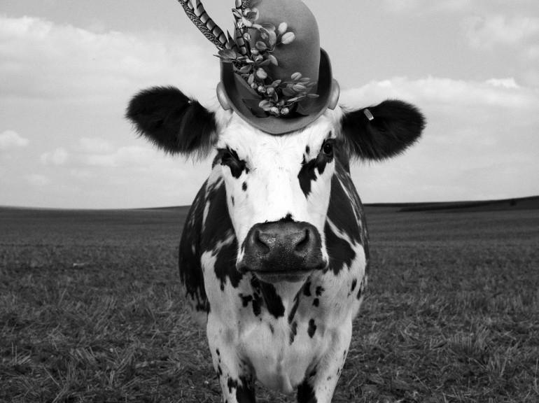 Exposition Oh la vache ! / Jean-Baptiste Mondino / La Milk Factory