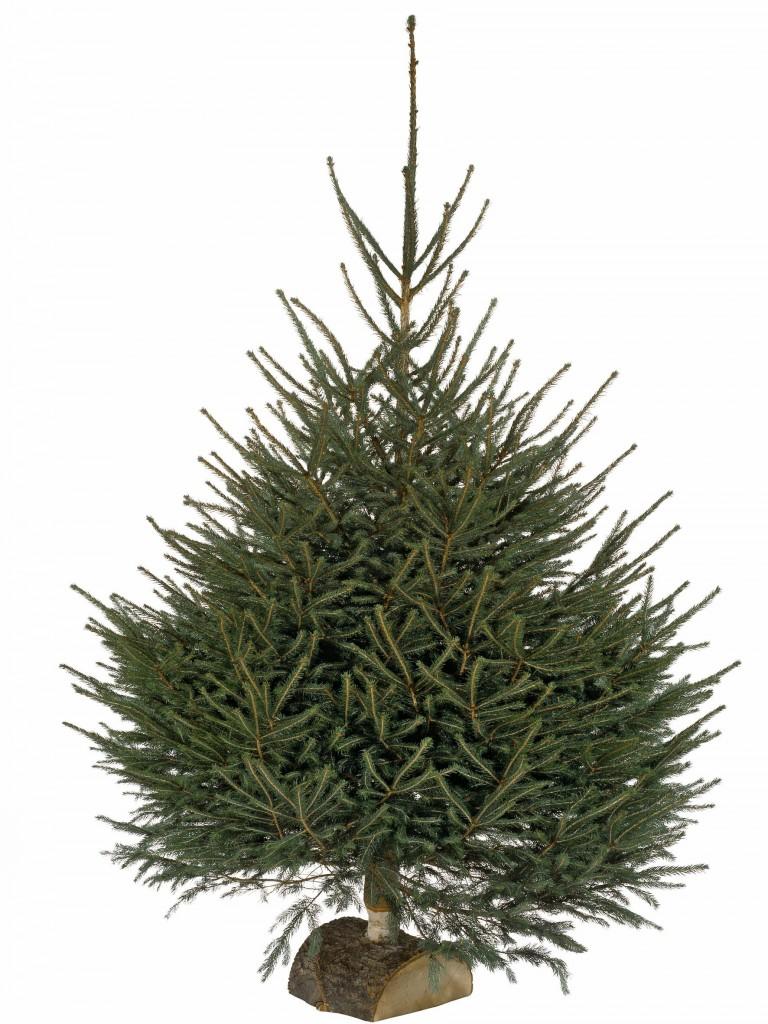 Sapin de Noël authentique et naturel